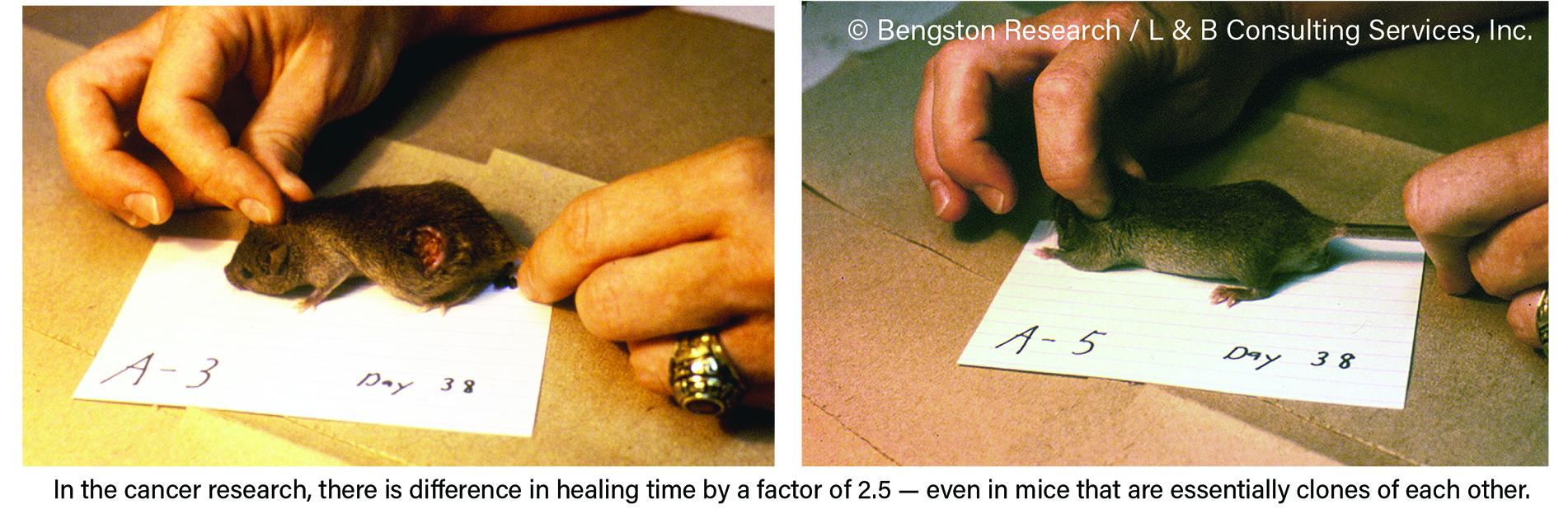 FAQ - Bengston Research